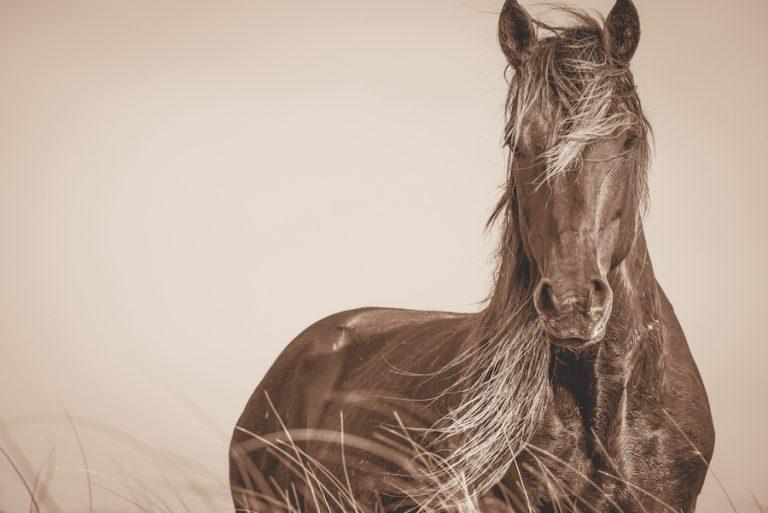 cueman_horse