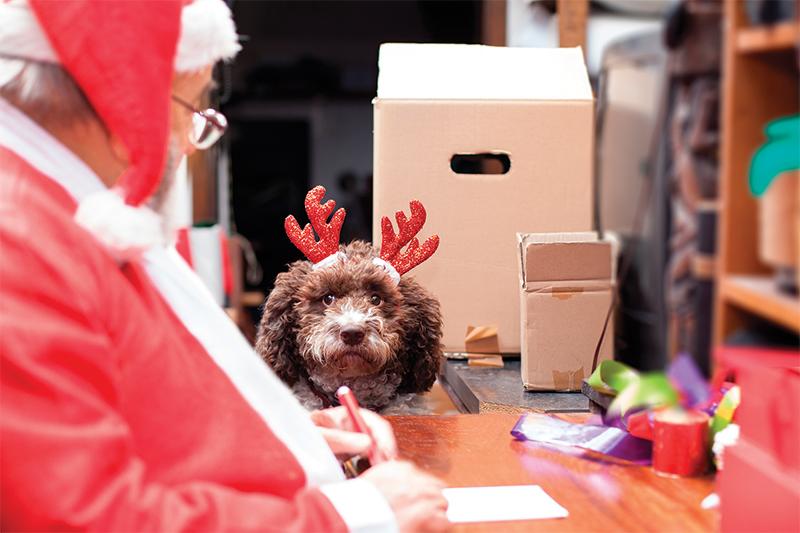 santa paws dog